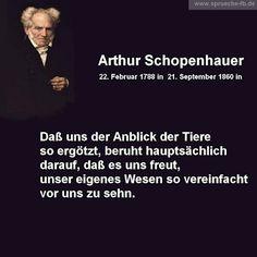 arthur schopenhauer zitate sprüche