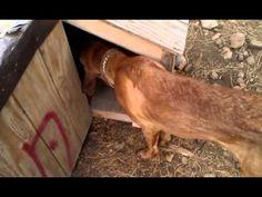 Solar radiant heated dog house #2 - http://www.7tv.net/solar-radiant-heated-dog-house-2/