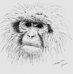 macaque monkey by ~simplelines on deviantART