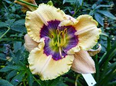 Gartenglück im Wandelgarten: Top-Pflanzen (1) - Taglilien