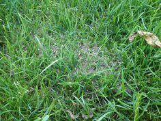 Jak pozbyć się mrówek z ogrodu?