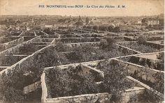 Les Murs à pêches, au début du XXesiècle, lors de leur exploitation par les arboriculteurs.