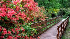 Garden Bridge, Stairs, Outdoor Structures, World, Plants, Decor, Stairway, Decoration, Staircases