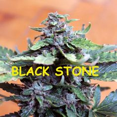Strain Review by TUTU: Black Stone