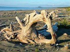 queen charlotte islands haida gwaii - Google Search