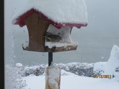 Bird by the see in Blizzard.