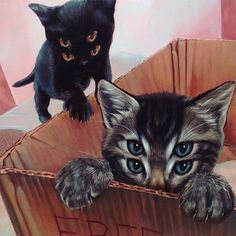 by @caseyweldon #cat #acid #lsd #dmt #psilocybin #shrooms #magicmushrooms #peyote #magic #hallucination #trippy #trippyart #psychedelic #psychedeliccat #psychedelicart #trippycat