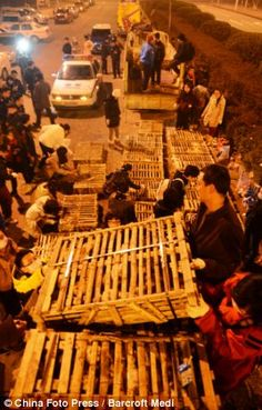 These pictures capture the moment animal lovers come to the rescue of more than 1,000 cats found starving, thirsty and cramped in cages on the back of a crashed lorry in China.The cats were destined for the restaurants of Guangdong until the road accident in Changsha, Hunan province delayed the journey by 24 hours and enabled the 50 locals to rescue them.They were nursed with food, water and milk before being packed off to Changsha Small Animal Protection Association for treatment.