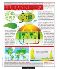 CI Photosynthesis Infographic | Infographicality