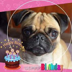 Pretty Party Pugs /& Westie Pups plus Freepost! Granddaughter Birthday Card