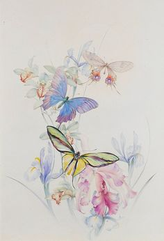 "Edward Julius Detmold (1883-1957),""Three large butterflies on irises and lilies"""