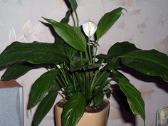 Plants to filter indoor air.