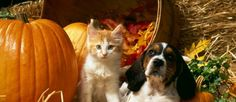 How to keep our 4 legged babies safe on #Halloween :)