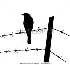 Illustration of silhouette of the bird on barbed wire vector art, clipart and stock vectors. Silhouette Cutter, Bird Silhouette, Cat Drawing, Line Drawing, Drawing Ideas, Vogel Illustration, Western Tattoos, Barbed Wire Fencing, Wire Fence