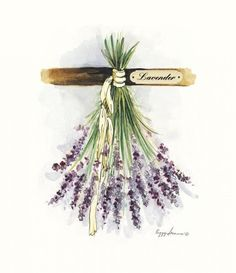 Drying Herbs Lavender by Peggy Abrams. Drying Herbs Lavender by Peggy Abrams. Art Floral, Vintage Diy, Vintage Images, Watercolor Flowers, Watercolor Paintings, Lavender Cottage, Lavender Flowers, Lavander, Flowers Garden