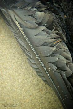 """feather on the beach"" | jude mcconkey"