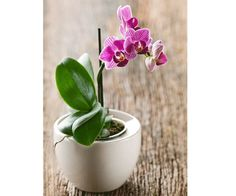 How to make your orchids flower