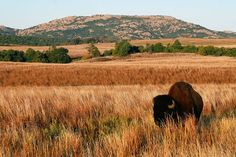 Blackjack Mountains, Oklahoma (It's been said that Hidalgo's descendants still roam these mountains today, as part of the Gilbert Jones herd. I'm gonna have to see these beautiful mustangs run wild and free one day.)