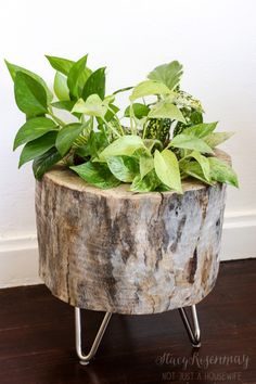 stump planter with hair pin legs