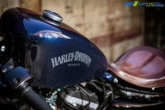 2012 Harley Davidson Iron 883 - GP_AMF-3