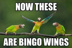 lol bingo wings #bingowings