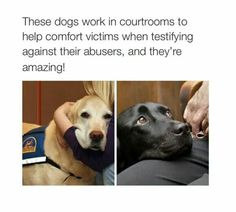 These dogs work in courtrooms to help comfort victims when testifying against their abusers, and they're amazing!