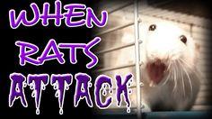 Why Rats Bite | Ft. The Rat Sheik
