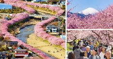Cherry Blossoms Have Just Bloomed In This Japanese Town, And The Photos Are Magical | Bored Panda