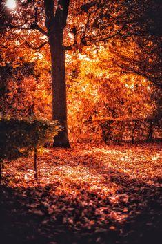 Autumn in Vienna, Austria by Patrycja Kasprzycka   www.kasprzycka.at   Instagram @p.kasprzycka   #fall #autumn #city #travel #leaves #bokeh #trees #vacation #sun #vienna #austria #photography #europe #shadow Autumn, Fall, Bokeh, Europe, Leaves, Vienna Austria, Graphic Design, Celestial, Vacation