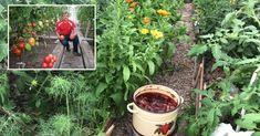 Există 2 motive întemeiate de ce fiecare grădinar sau pur și simplu amator de verdeață pe pervaz trebuie să aibă rezerve de coji de ceapă. În primul rând, afidele, puricii, acarienii, omizile, tripșii, larvele acestora și ale insecte periculoase pentru răsaduri nu pot suporta acaricidul pe care îl conține coaja de ceapă. Și nici bolile bactericide nu vor afecta plantele dumneavoastră, în special mana produsă de ciuperca Pseudoperonospora cubensis sau mana simplă, fitoftoroza și putregaiul ... Sea Shells, Agriculture, Plant, Seashells, Shells