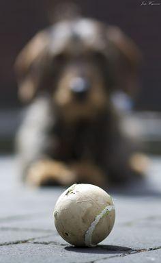 Fokuser på objekt foran hunden
