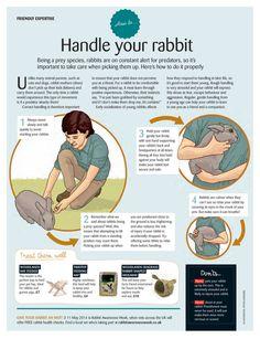 rabbit care – Invoke Delight and Inspire