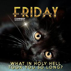 Friday what in holy hell took you so long   Friday Comments and Graphics, TGIF comments, Happy Friday Graphics, Enjoy Friday Images, Friday Pics