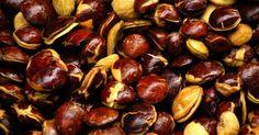 Tips dan Trik Makan Jengkol Tanpa Khawatir Bau Agar, Benefit, Beans, Vegetables, Health, Tips, Food, Prostate Cancer, Medicinal Plants