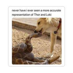 Avengers Humor, Marvel Jokes, Films Marvel, Funny Marvel Memes, Dc Memes, Meme Comics, Memes Humor, Funny Memes, Loki Meme