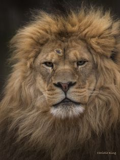 the look by Christie King, via 500px