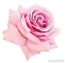 Image result for you are allowed into my life if you tickle me pink at a wimp of your voice quotes