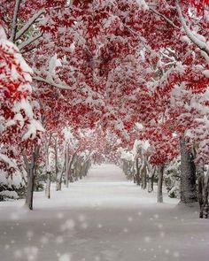 Arrival of winter snow. Winter Magic, Winter Snow, Winter Walk, Winter Leaves, Fall Winter, Autumn, Winter White, Winter Photography, Nature Photography
