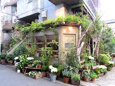 おしゃれ 花屋 home trends 2017 - Home Trends Garden Cafe, Garden Shop, Home And Garden, Cafe Shop, Different Plants, Home Trends, Cafe Design, Amazing Gardens, Decoration