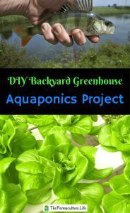 DIY Backyard Greenhouse Aquaponics Project – Part 3 Building a DIY backyard greenhouse aquaponics system. I talk about system design, method tradeoffs, costs, and construction choices. Aquaponics Greenhouse, Backyard Greenhouse, Greenhouse Plans, Aquaponics System, Hydroponic Gardening, Hydroponics, Organic Gardening, Aquaponics Plants, Small Greenhouse