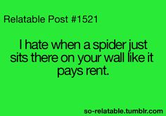 Freeloadin' spider...It wouldn't be so funny if it weren't so damn true....