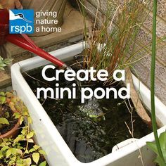 Water brings a magical quality to your garden   Create a mini pond   #homesfornature