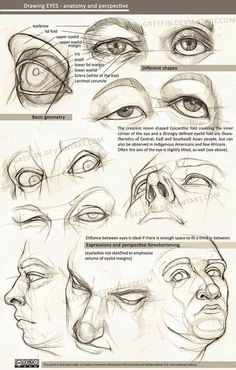 Drawing eyes - anatomy and perspective by greyfin on DeviantArt - - Drawing eyes – anatomy and perspective by greyfin on DeviantArt daily drawing Zeichnende Augen – Anatomie und Perspektive von Greyfin Realistic Eye Drawing, Human Figure Drawing, Figure Drawing Reference, Drawing Eyes, Anatomy Reference, Life Drawing, Body Drawing, Human Eye Drawing, Human Anatomy Drawing
