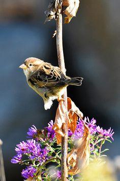 bird - autumn - nature