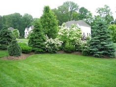 Ideas backyard privacy landscaping trees flowering shrubs for 2019 Landscaping Trees, Privacy Landscaping, Outdoor Landscaping, Front Yard Landscaping, Arborvitae Landscaping, Acreage Landscaping, Country Landscaping, Shrubs For Privacy, Privacy Fences