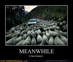 Sheep Time!