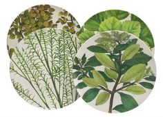 John Derrian's vintage botanical at Target stores. Forest Room, Vases Decor, Decorating Blogs, Leaf Prints, Home Collections, Fall Decor, Plant Leaves, Old Things, Pottery