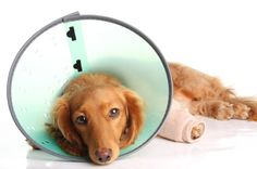 Break a Leg: Broken bones in #dogs and #cats