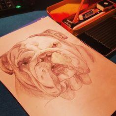 English bulldog Carlo