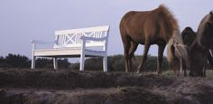 Settee, Persona, Horses, Animals, Animales, Sofa, Animaux, Animal, Animais